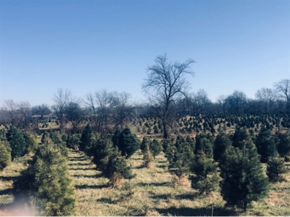 Pumpkins and Pines in Pleasant Hill!  We loved how welcoming the farm was