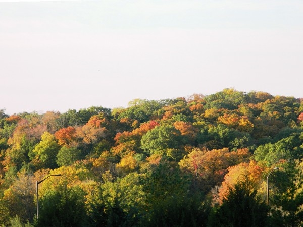 Maple Woods Preserve is aglow with fall colors. One of the best sights in Kansas City