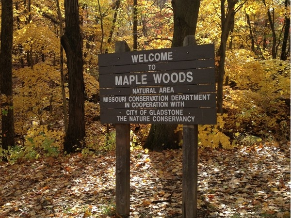 Maple Woods Natural Area, the walking trails across from Maple Park Place in the fall