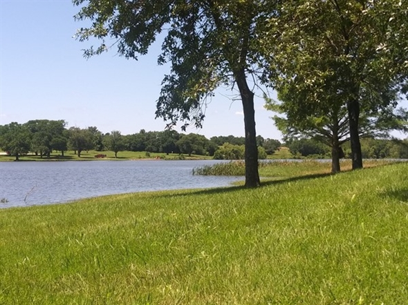 Such a peaceful park on Miola Lake - great place for a picnic