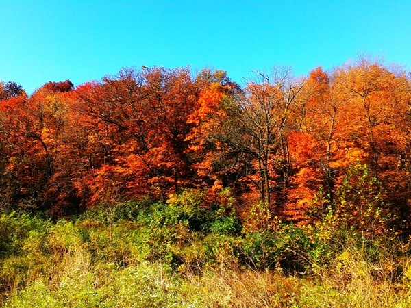 Stroll through the beautiful umbrella of fall color at Maple Woods Nature Sanctuary in Gladstone