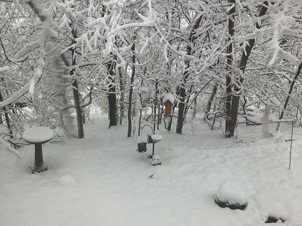 Beautiful snow but just a bit much for the birds and squirrels to come out and eat.  Welcome 2019