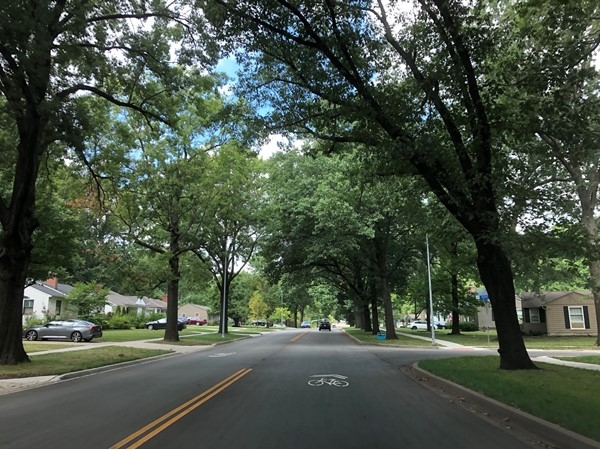 Beautiful, mature trees off Roe Blvd covering the road. Love the shade