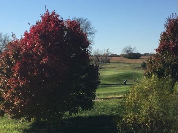 Gorgeous afternoon for a golf game before winter