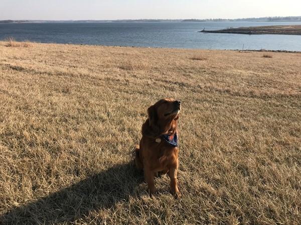 Diego the Golden Retriever visits Smithville Lake