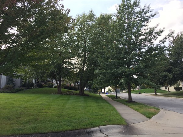 Beautiful tree lined streets in The Fairways