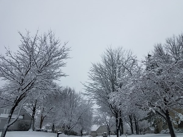 Beautiful winters in Nottingham Forest - Blue Valley Schools - Overland Park KS