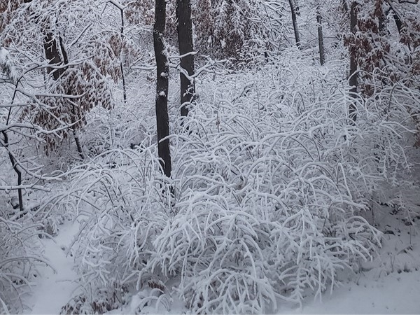 Our beautiful woods after the snowfall