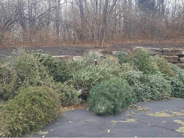 Thanks Riss Lake HOA for taking our Christmas trees. They will be put in the lake for fish habitat