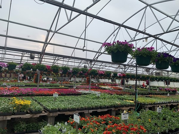 Farrand Farms in Independence off of Noland Rd has a great selection of plants