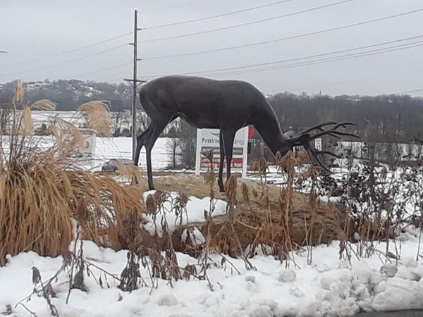 Prairie Hills has deer