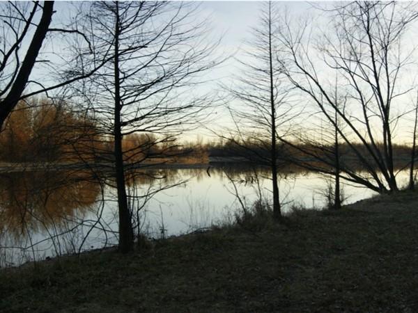 Treed shoreline along Coot Lake