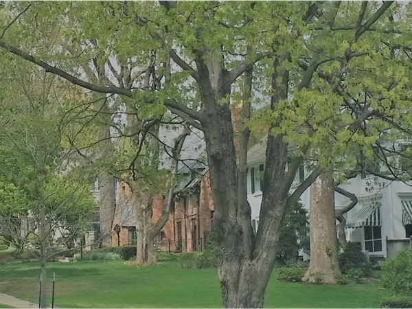 Beautiful neighborhood with classic homes on tree lined streets in Brookside
