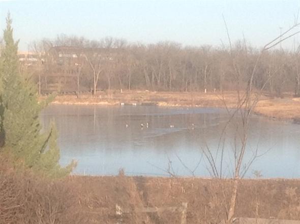 Ducks enjoying Maize Lake by Canyon Creek