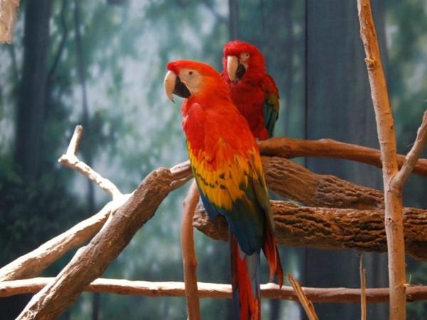 Beautiful birds at the Kansas City Zoo