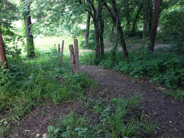 Swanson Streamway dog park: beautiful woods for you to enjoy while your dogs are having fun.