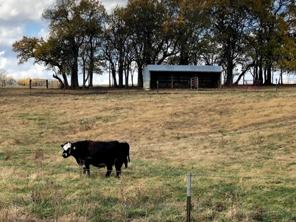 If you are a nature and animal lover you will love the sights of private ranches in the neighborhood