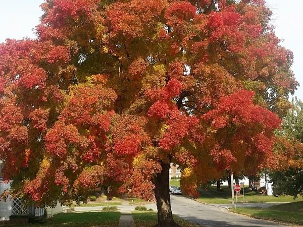 Gorgeous fall foliage on 15th Street