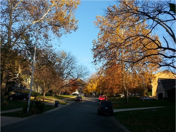 Tree lined streets at Greystone West