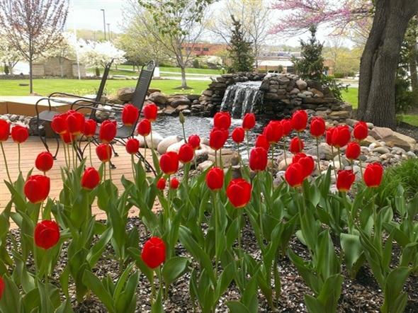 A Kansas City spring finally over takes a long winter