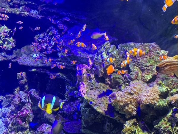Take your family out to Sea Life. This is KC's Aquarium with new exhibits now
