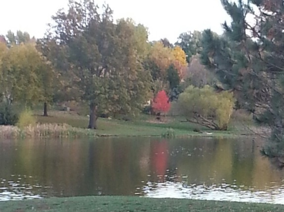 The lake at Persimmon Hill