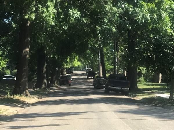 Mature tree lined streets! Feels like home