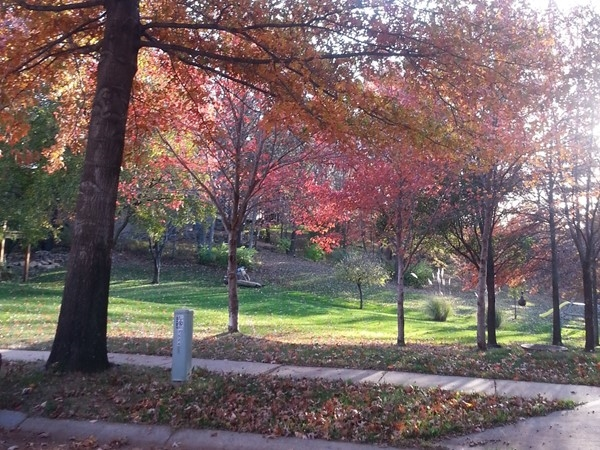 Fall foliage in Ashley Park