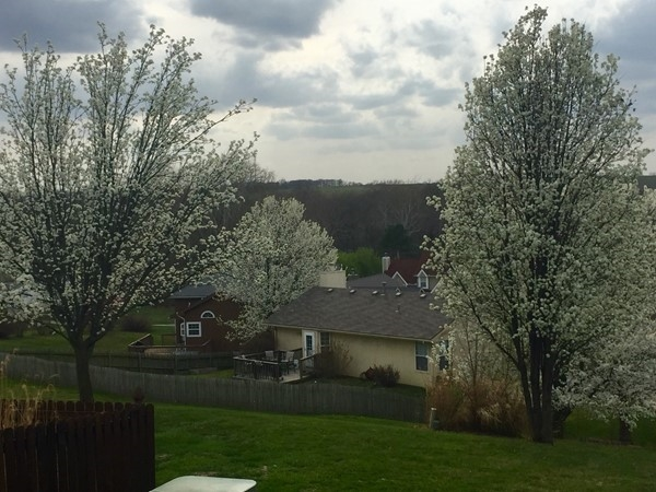 Picture perfect views in Clay Ridge. The dogwoods are spectacular in full bloom