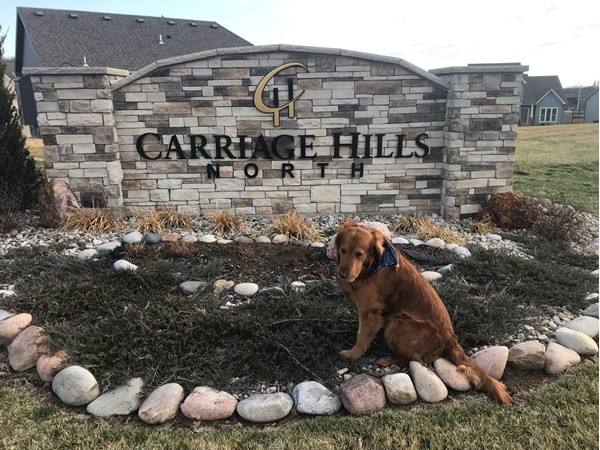 Diego the Golden Retriever visits Carriage Hills North in Gladstone