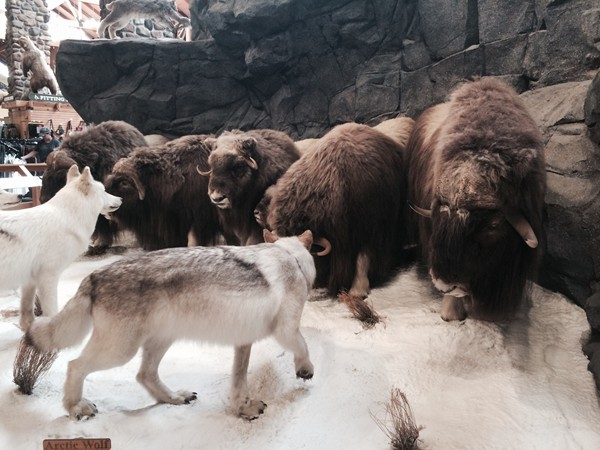 Inside Cabela's at The Legends shopping area