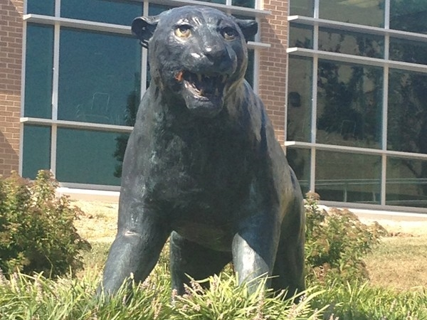 The Panther is Parkhill South High School's Mascot.