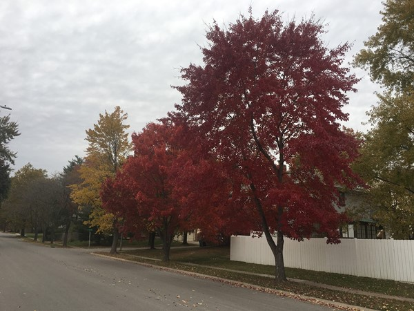 Brooktree tree lined streets in magnificent fall colors
