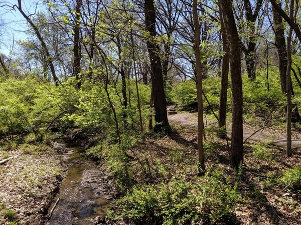 Hike through the woods behind Briarcliff Elementary