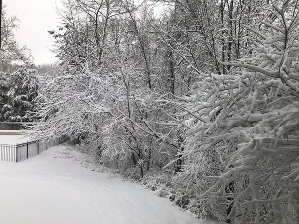 Silent, wonder of winter. Love this