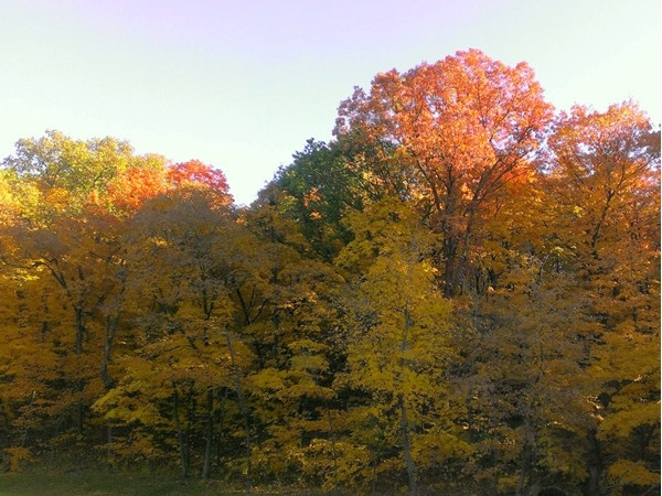 Fall at Maple Woods Nature Preserve