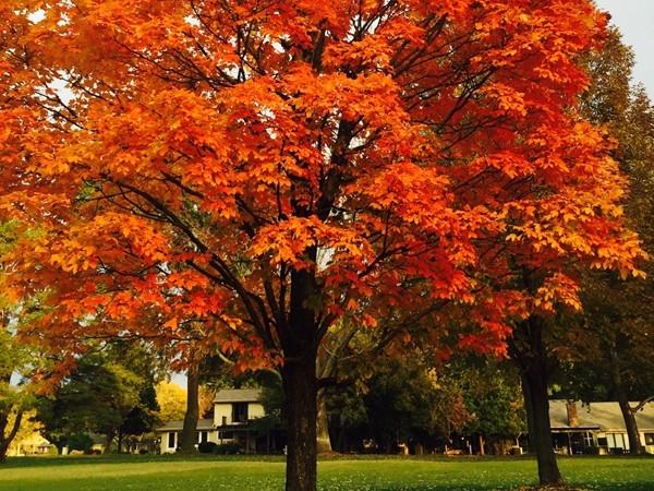 Fall in Leawood