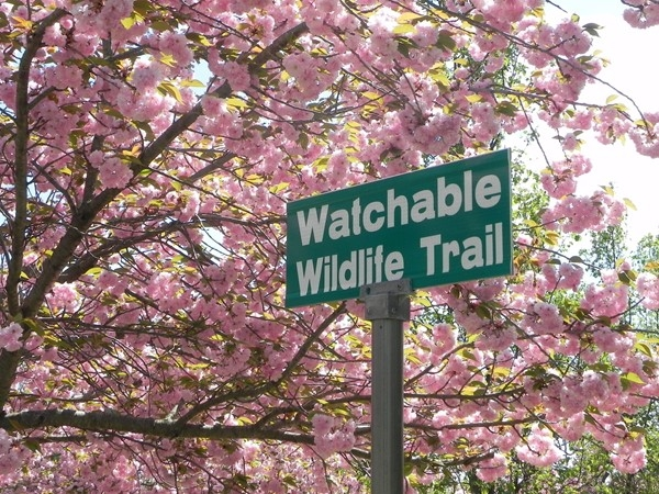 Wildlife Trail is showing spring blooms in Washingtion Lake Park