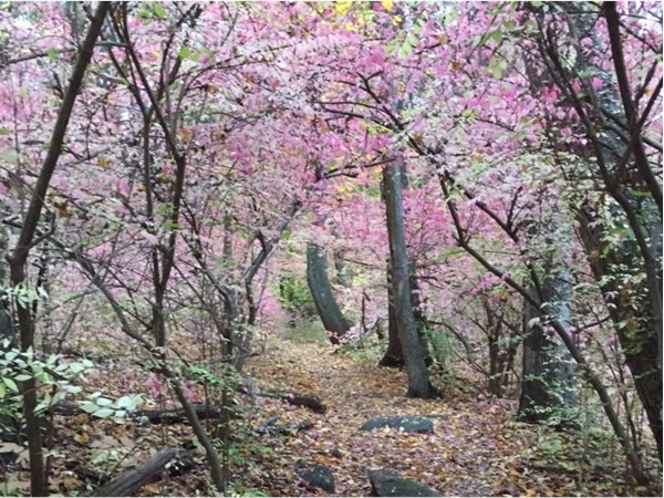 Gorgeous autumn trails in local Tourne Park with borders in Boonton, Denville, and Mountain Lakes