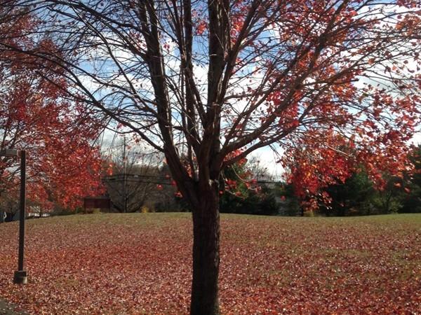 Tree lined Marlboro street