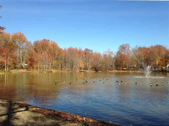 Holiday Park Pond in Manalapan
