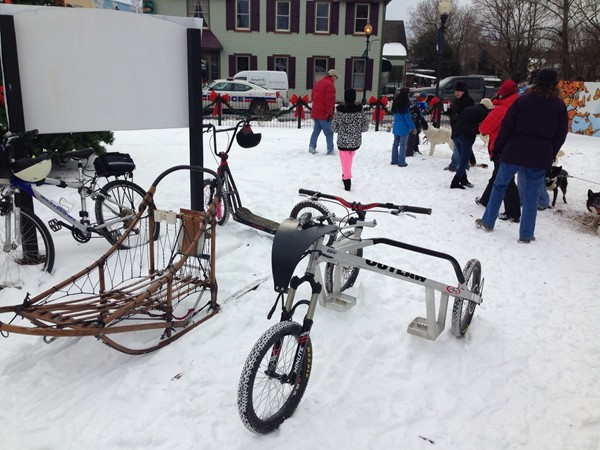 Dog sled at Fire and Ice Festival