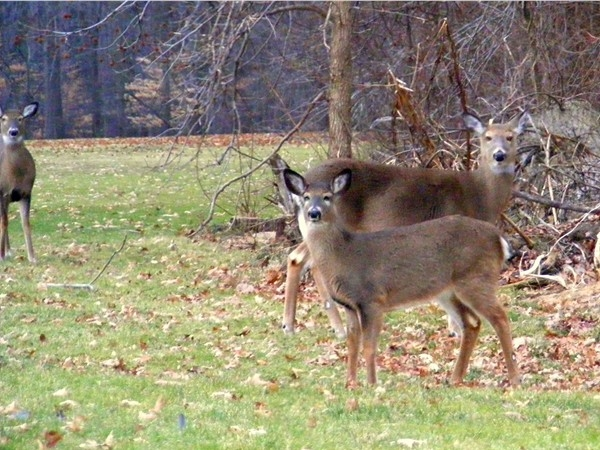Wildlife viewing at White Beeches Country Club