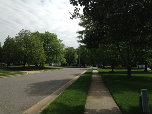 Tree Lined Streets of Manalapan