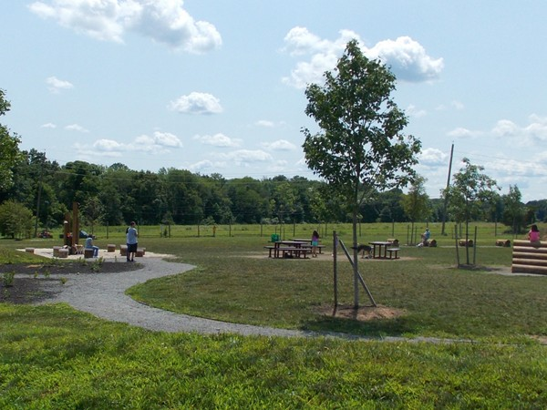 The Dog Park at Rosedale Park - the biggest dog park I ever saw. This is a small section of it