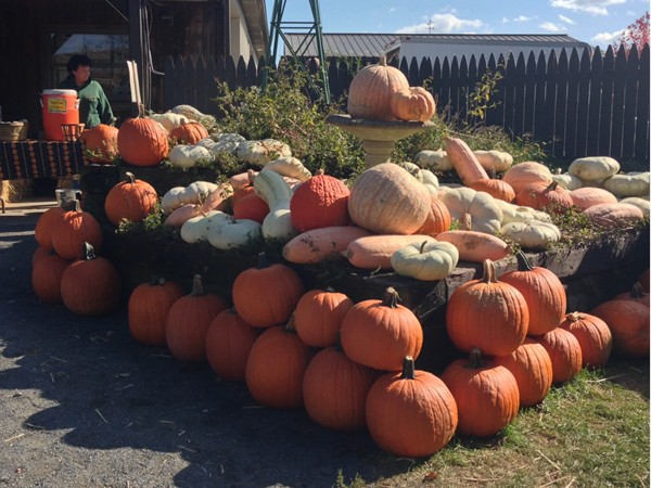 A gorgeous fall display at the Donaldson Farm
