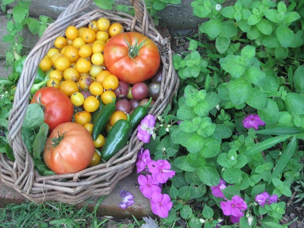 Some of the bounty from Chester Community Garden