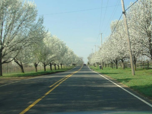 Colts Neck in spring on Phalanx Road