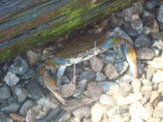 Great crabbing by the bridge!