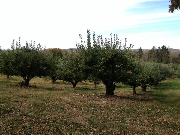Pick your own fruit at the Stonyfield Orchards in Belvidere